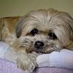 sad doggy