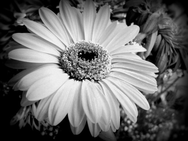 black'n'white flower