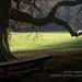 tieň stromu