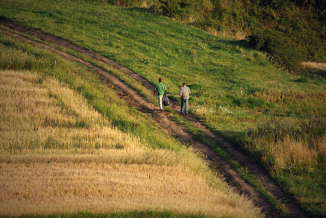 Poľná cesta