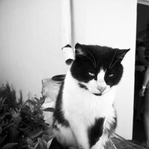 Miaow-C