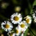 Ukludňujúce kvety
