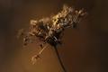 Jesenné kvety V.