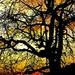strom vo vecernom sere