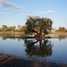 strom zivota-