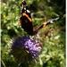 Moja  motýlia prvotina