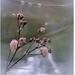 Oživenie suchých kvetov