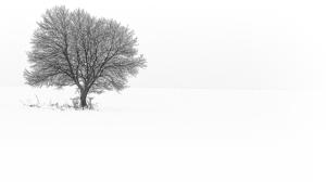 biela samota