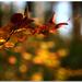 jesenný   pozdrav...