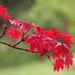 Aj jar sa vie červenať