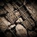 v zajatí