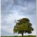 Strom nad Zvolenom 1
