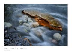 Život vodných kameňov