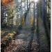 Cestička lesnou jeseňou
