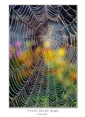 Pavúk úplne mimo