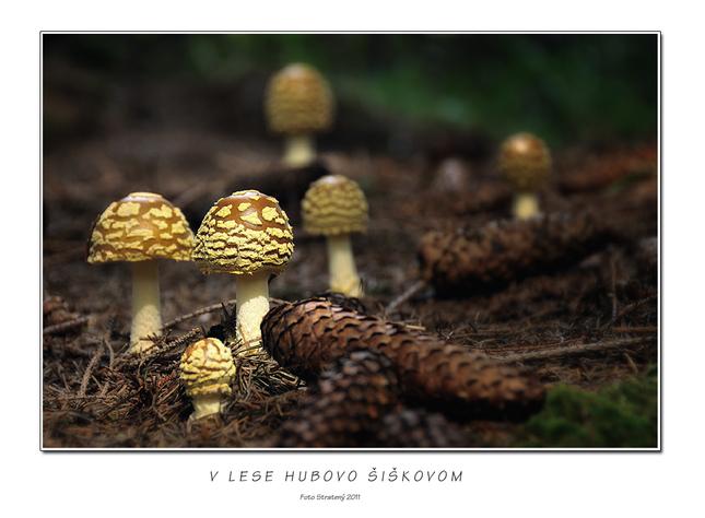 V lese hubovo šiškovom