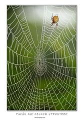 Pavúk nie celkom uprostred