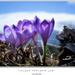 Fialoví poslovia jari