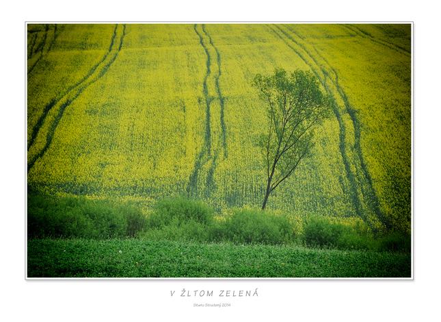 V žltom zelená - Fotografia - Fotogaléria  d017273598a