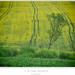 V žltom zelená