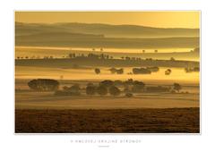 V hmlovej krajine stromov