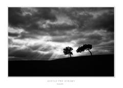 Svetlo pre stromy