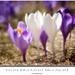 Fialová biela fialová biela fial