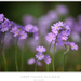 Jarné fialovo kvietkovo