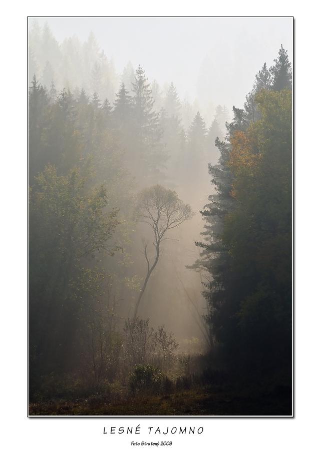 Lesné tajomno - Fotografia - Fotogaléria  0226c7df647