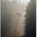 Lesné tajomno