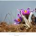 Dva kvety v kopcoch
