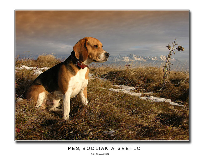 Pes, bodliak a svetlo