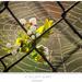 V zajatí sietí