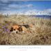Jarná psíkovská pohodička