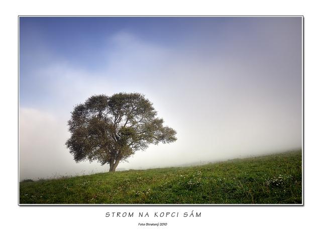 Strom na kopci sám - Fotografia - Fotogaléria  c0447fd5ece