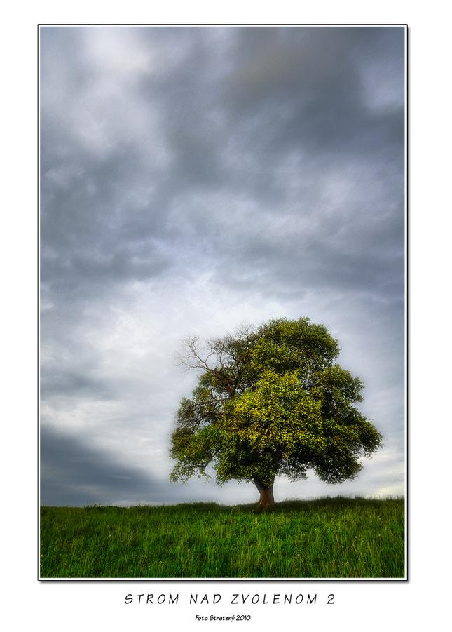 Strom nad Zvolenom 2 - Fotografia - Fotogaléria  2212ab3f209