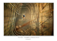 Pavúk takmer uprostred