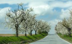 Bielokvetá cesta..