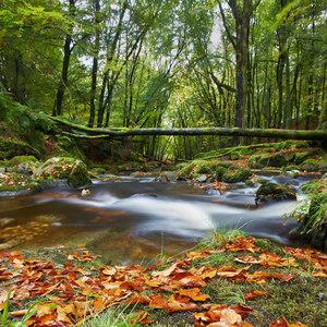 Írska jeseň