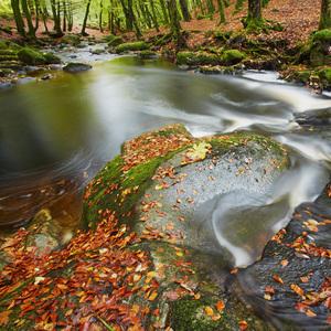 Jesenny potok