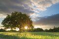 Slnečný strom