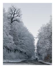 Beautiful winter fake
