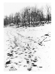 Jewish cementery in the winter