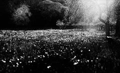 Forest sníva 2