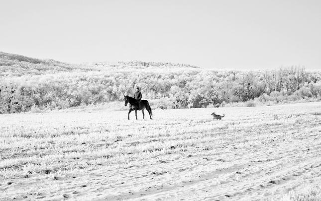 Nudná konina a psina