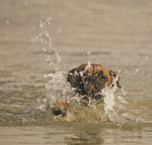 Počkaj ja už plávam ,)