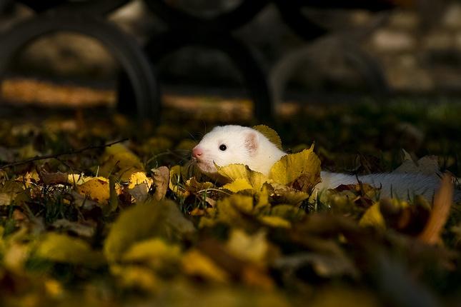 lezalo tam v trave,male biele ku