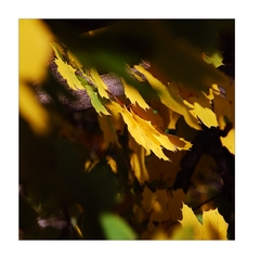 podzimní......