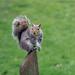 vevericka v parku