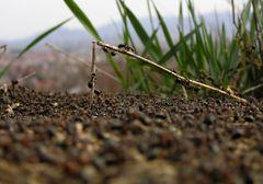 mravenčí teambuilding